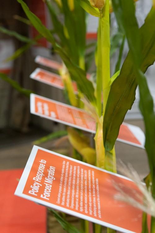 Corn stalks with infographics